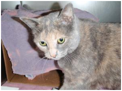 Abbie is a medium Tortoiseshell with large green eyes.