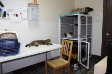 Cats hang out in one of the work rooms.