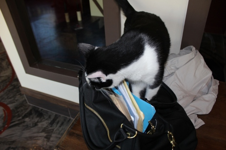Nope, no treats in there.
