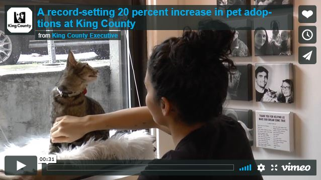 a record setting 20 percent increase in pet adoption Capture