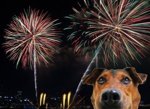 Pets and fireworks RASKC