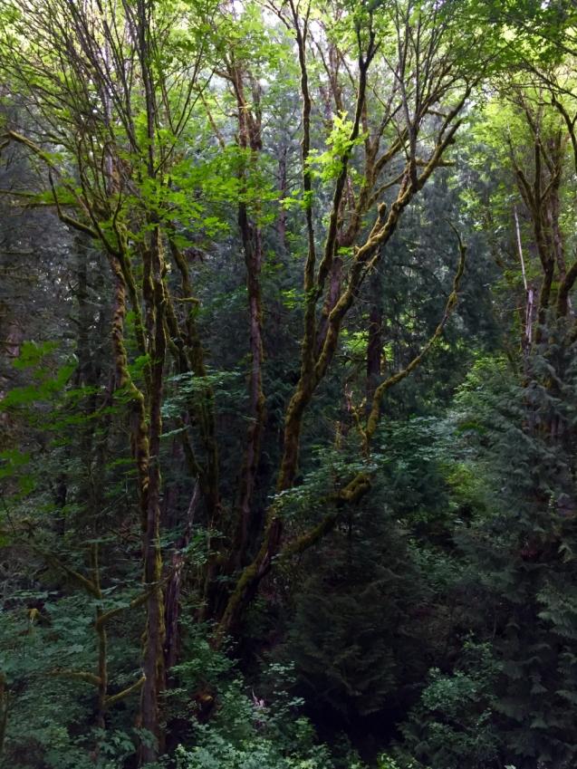 Preston Snoqualmie Trail, King County Parks,