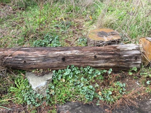 brush-boots-log-garlic-mustard-kiwanis-ravine-03102017_kpeterson-reduced