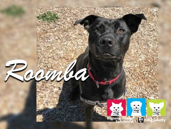 PetoftheWeek_Roomba_2018-Aug-22