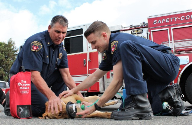 Pictured: Assistant Chief Chris Flores (Left) and Firefighter Apprentice Mark Goetsch (Right) of Tukwila Fire Department demonstrate how to properly apply a pet oxygen mask to a dog.