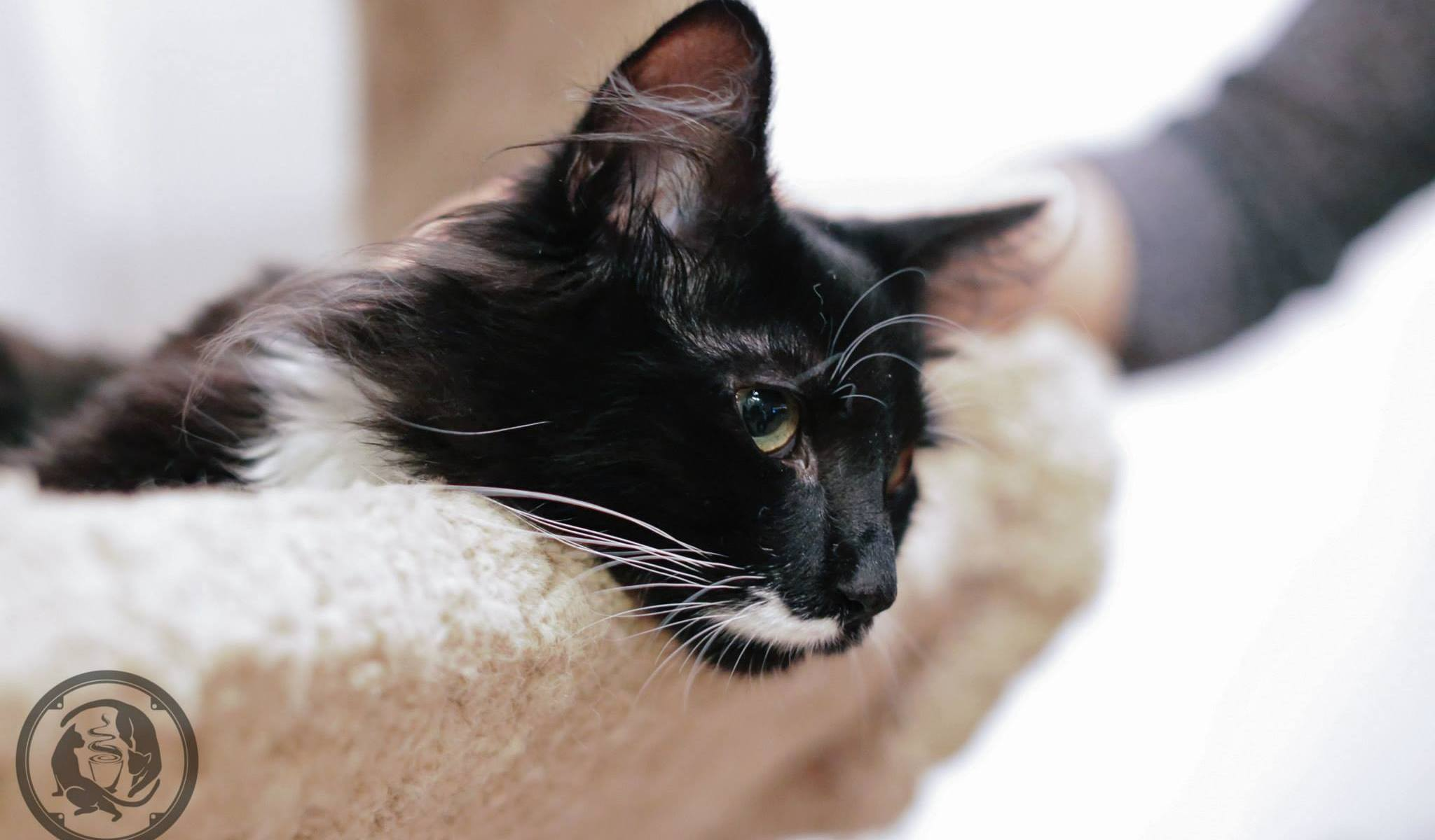 Black Cat Cafe Seattle