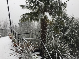 Snow_Palm